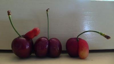 buah lucah