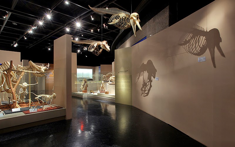 From Dragon to Beast Extinction and Radiation-Exhibition-leogogo-design