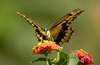 Butterfly Wallpaper Hd 3d