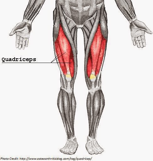 Monday Muscle Anatomy: Quadriceps | Frazier Family Fitness: Fit and Well