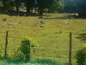 neighbor's cow pasture