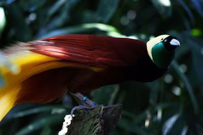 Kawasan alam Bali Bird Park