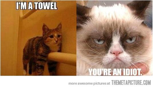 Funny Meme Grumpy Cat : Funny cat memes june