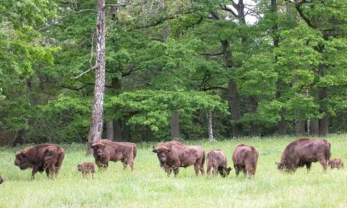 Charm of an Outcast: 10 Must See Destinations in Belarus Belavezhskaja Pushcha National Park Belarus