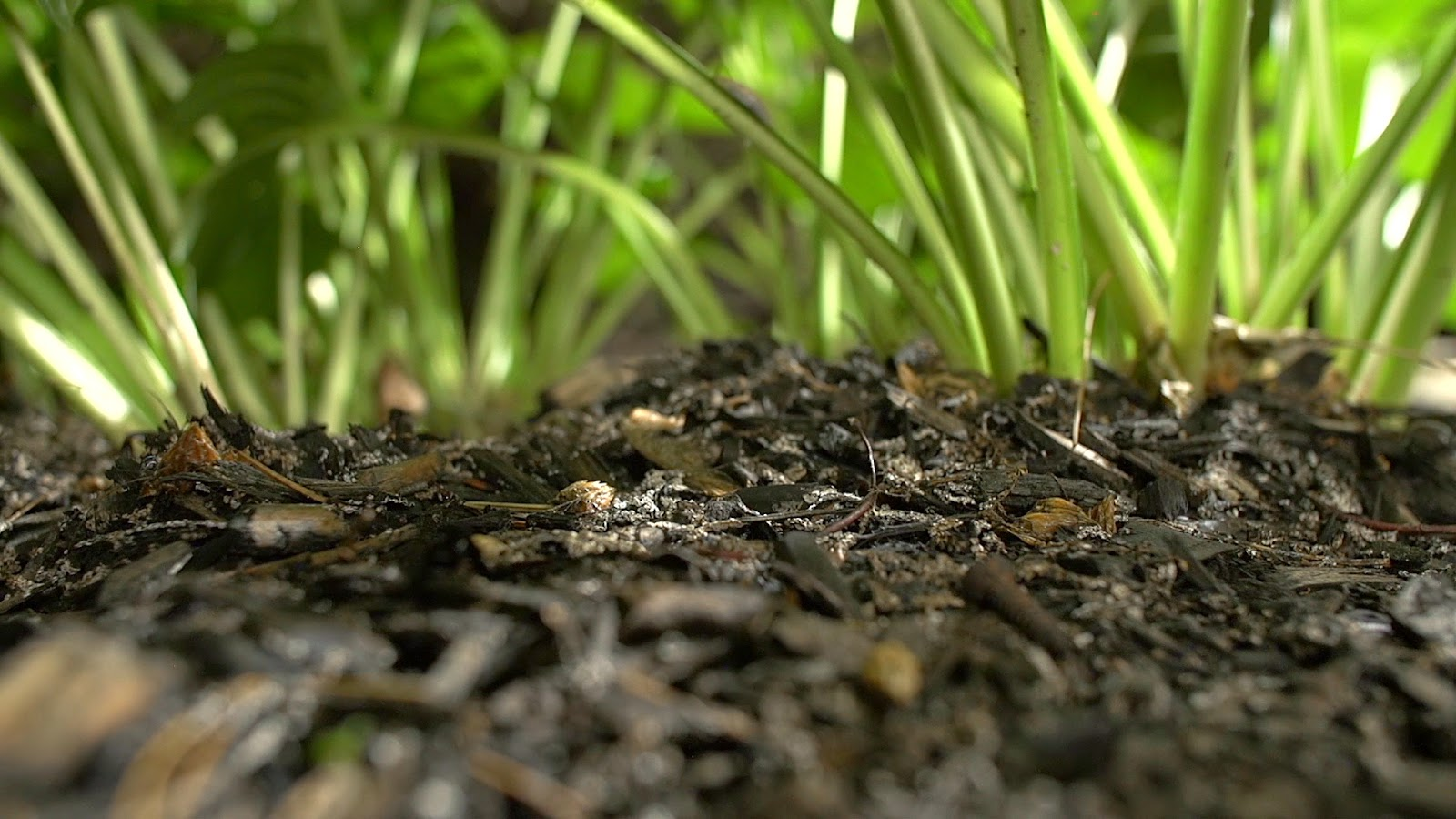 free royalty free footage of mulch