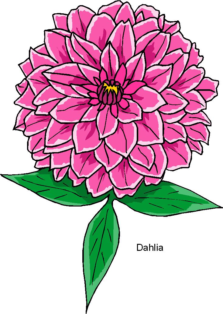 Dahlia Flower Free Clipart