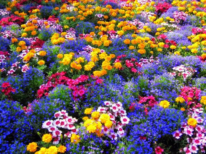 Flores+coloridas+ruthhelena