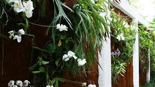 Monte um jardim vertical