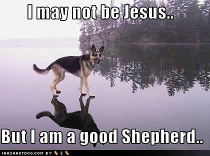 The German Shepherd: alsatian-theshepherd.blogspot.com