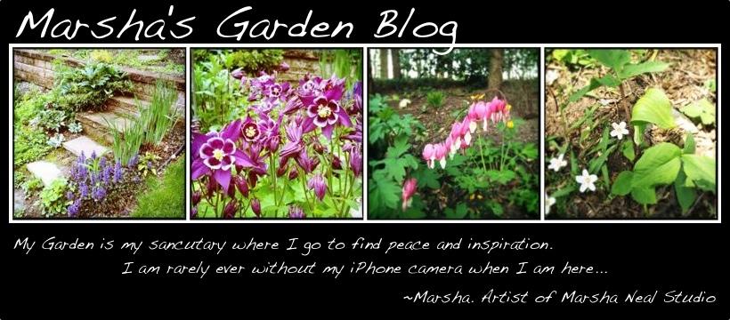 Marsha's Garden Blog