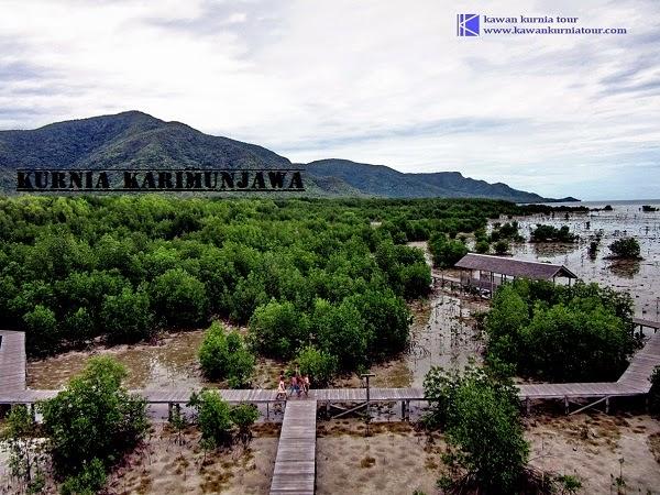 pemandangan di track mangrove