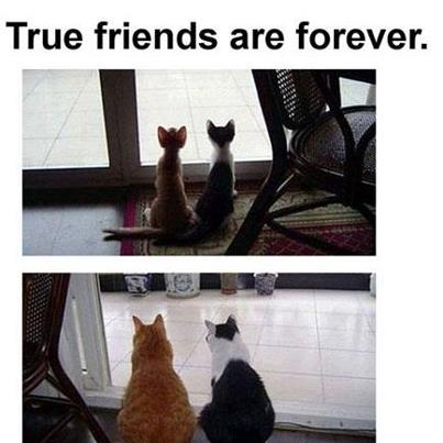 Gatos antes e depois