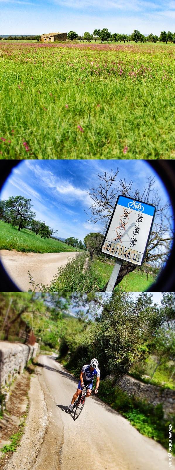 Mallorca, campos, ciclistas