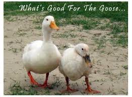 my 2 cents statins what 39 s good for the goose