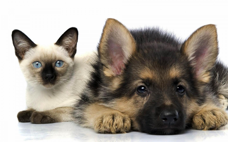 http://2.bp.blogspot.com/-ZxiI0uzl6eY/T9xQrLItf0I/AAAAAAAACY8/iwC1xtRTaAI/s1600/Cats+and+Dogs+images.jpg