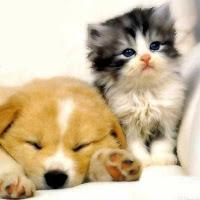 perrito y gatito juntos