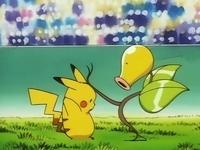 Bellsprout derrotanto a Pikachu
