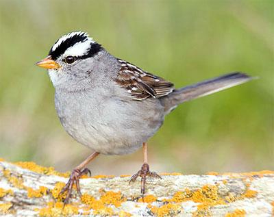 Otowi: Birding Today