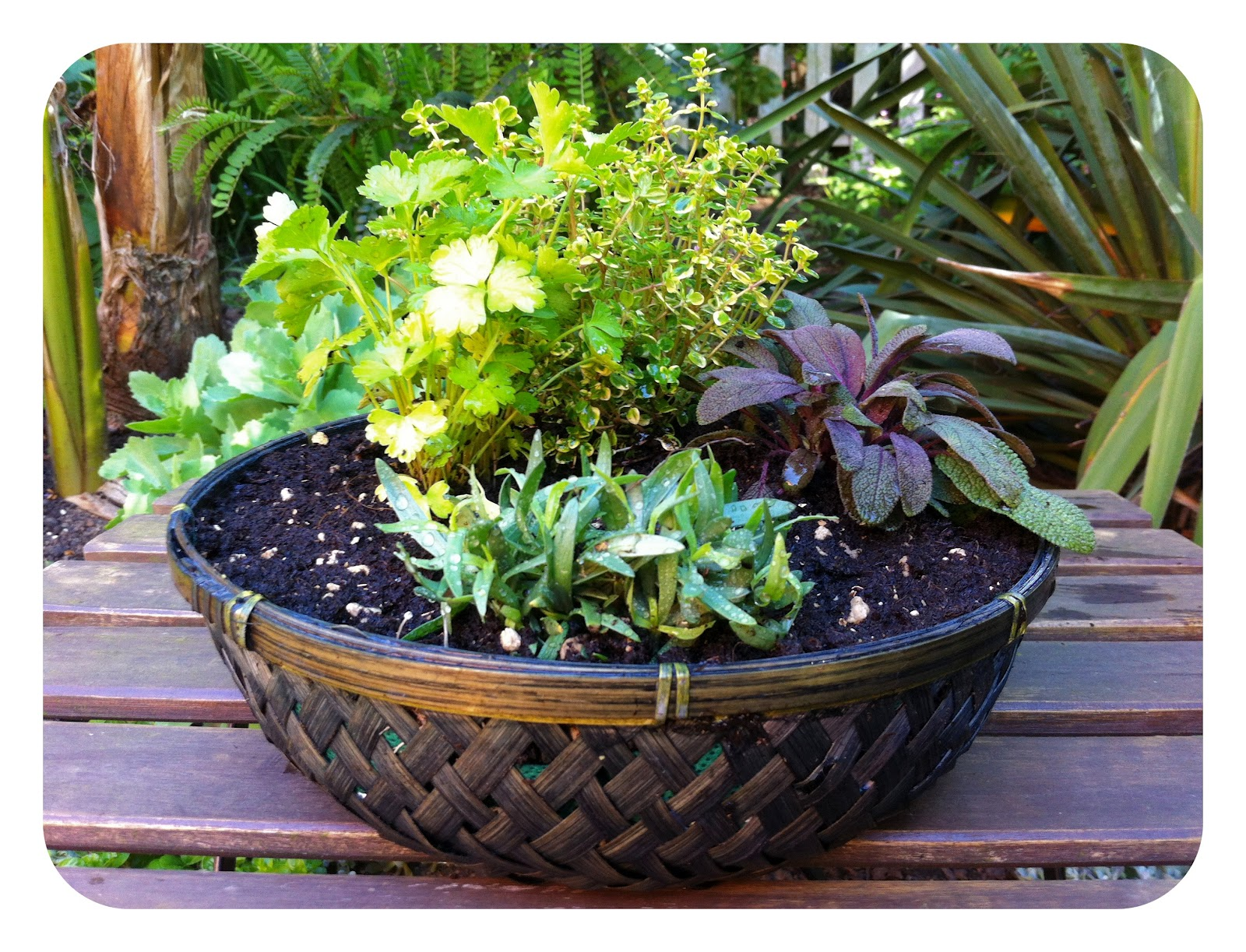 bell and star how to make a tabletop herb garden