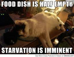 funny cat memes food dis is half empty