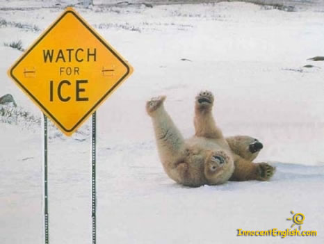 cool,funny-polar-bear-pic