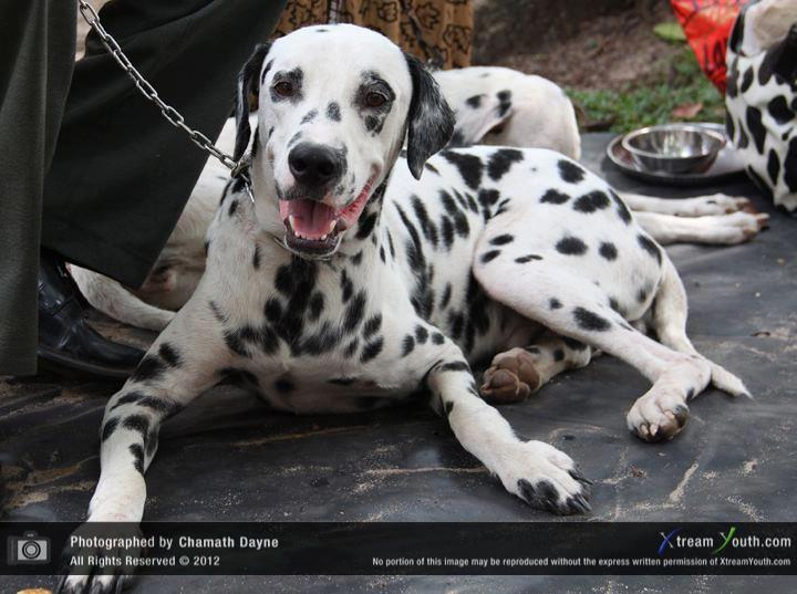 The Kennel Club of Sri Lanka organized a Dog show at the ...