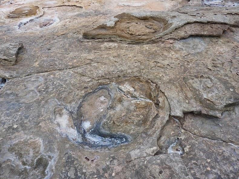 إكتشاف آثار أقدام ديناصورات في استراليا