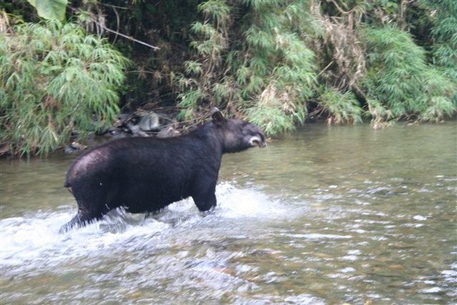 La Danta - Tapir o Bestia Andina colombia animales salvajes