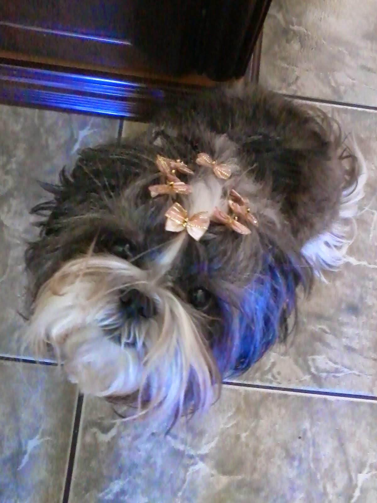 Violeta 4 anos