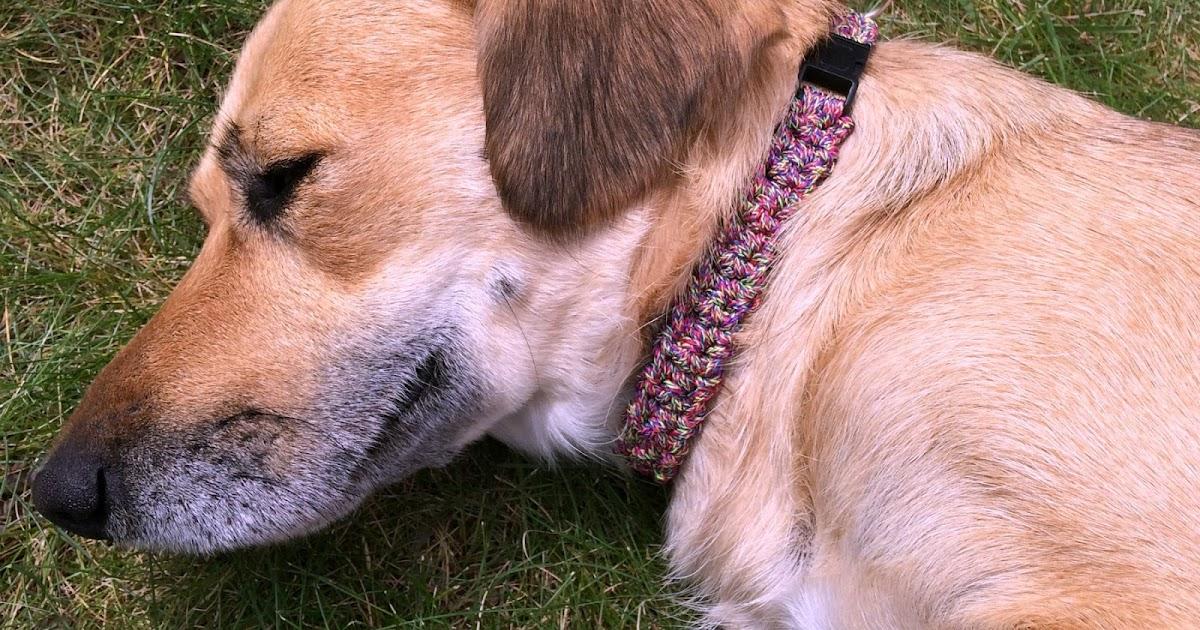Danyel Pink Designs Crochet Pattern Cordial Pet Collar