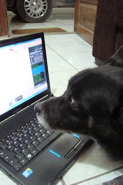 O cyber cão