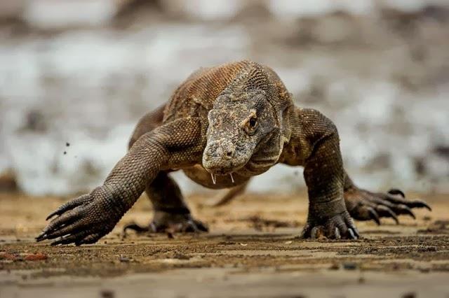 Naga Nusa Komodo