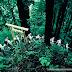 Dãy núi Kii hay bán đảo Kii - một trong các bán đảo lớn nhất ở Honshu.