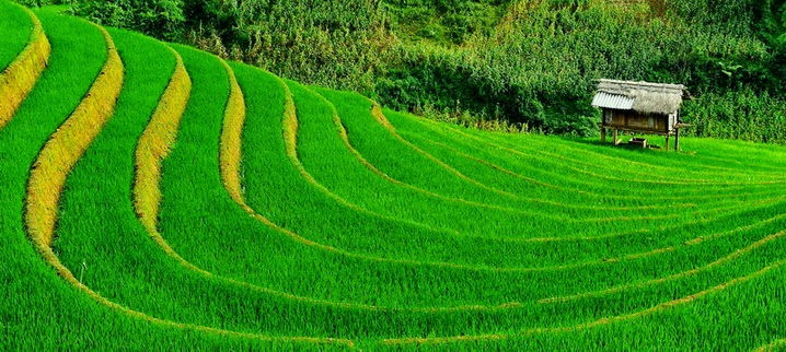 Terraced rice field Colours