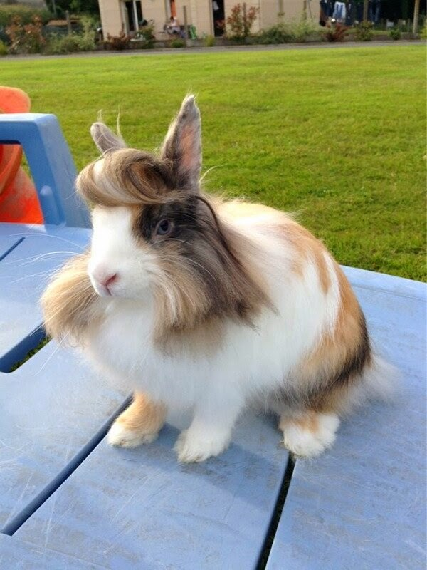 Funny animals of the week - 28 March 2014 (40 pics), bunny with stylish hairstyle