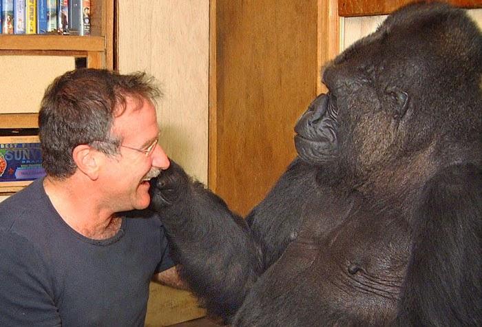 Koko gorilla bisa bicara