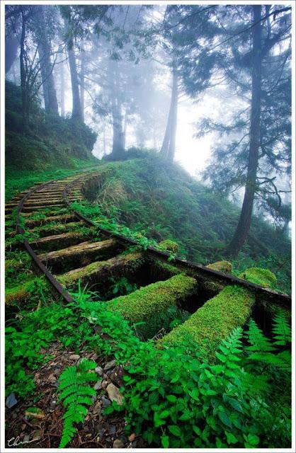vias del tren montaña vegetacion
