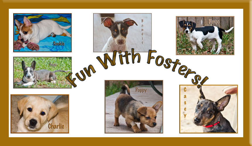 Fun with Fosters!