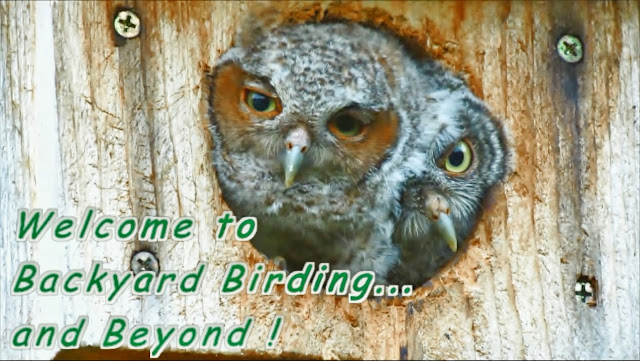 Backyard Birding Bird and Wildlife Videos