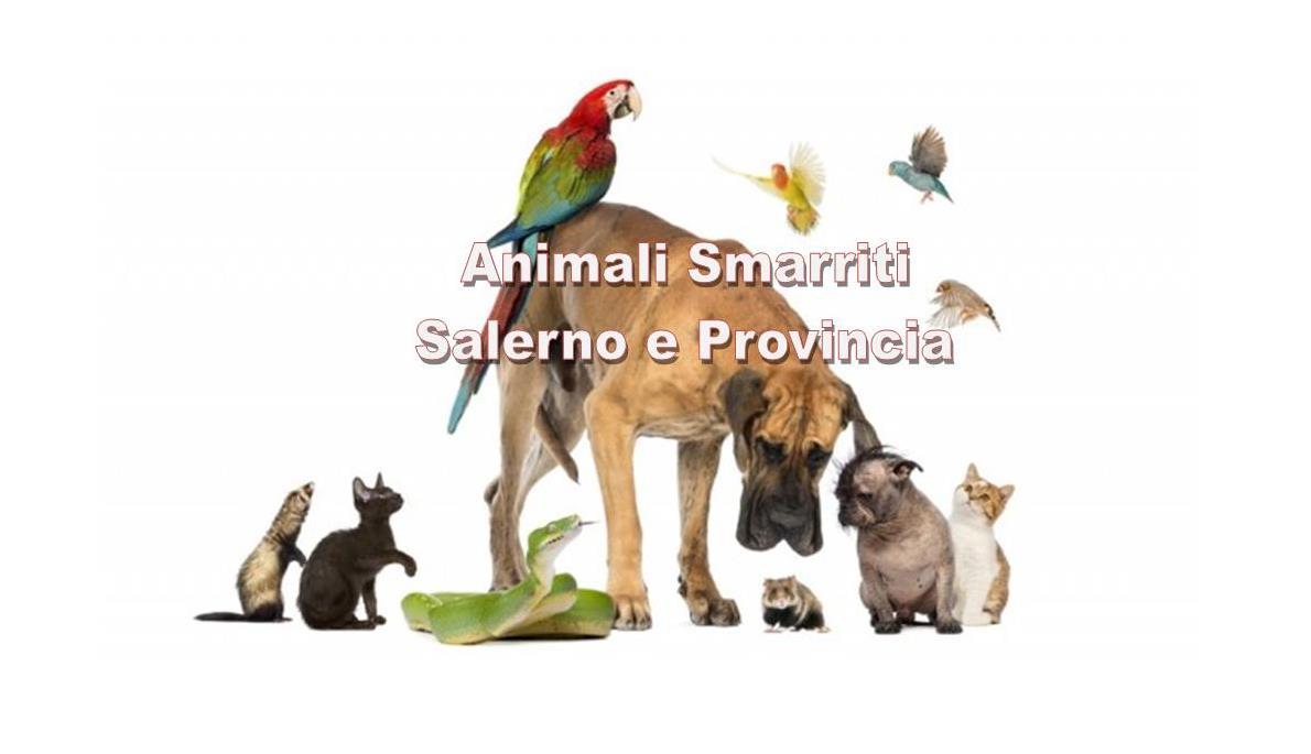 Animali Smarriti Salerno e Provincia