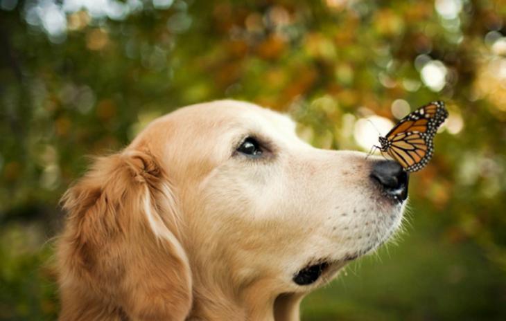 Borboleta pousada no focinho de um cachorro
