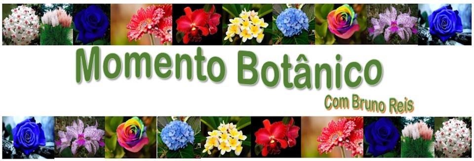 Momento Botânico