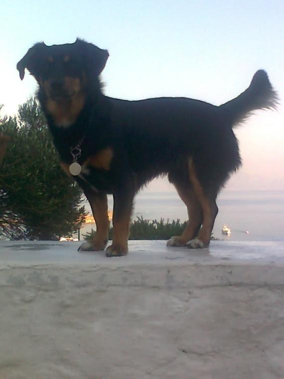 Troy μου