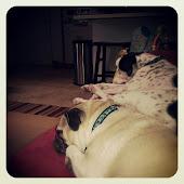 Pups!!