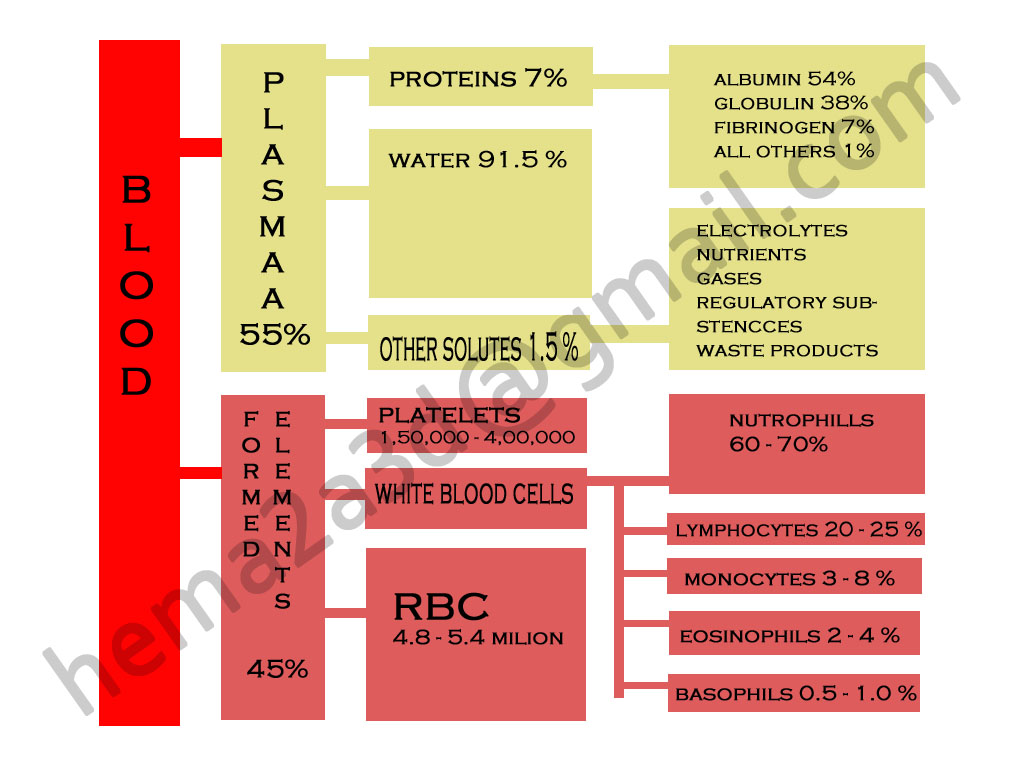 anatomy and physiology of heart blood and blood vessels short notes ...