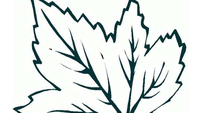 Imagina tu escuela cuento el rbol que no ten a hojas for El arbol que no tiene hojas
