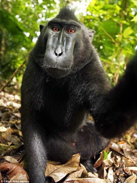 foto monyet lucu, gambar hewan kocak dan aneh, kumpulan foto unik dan gokil