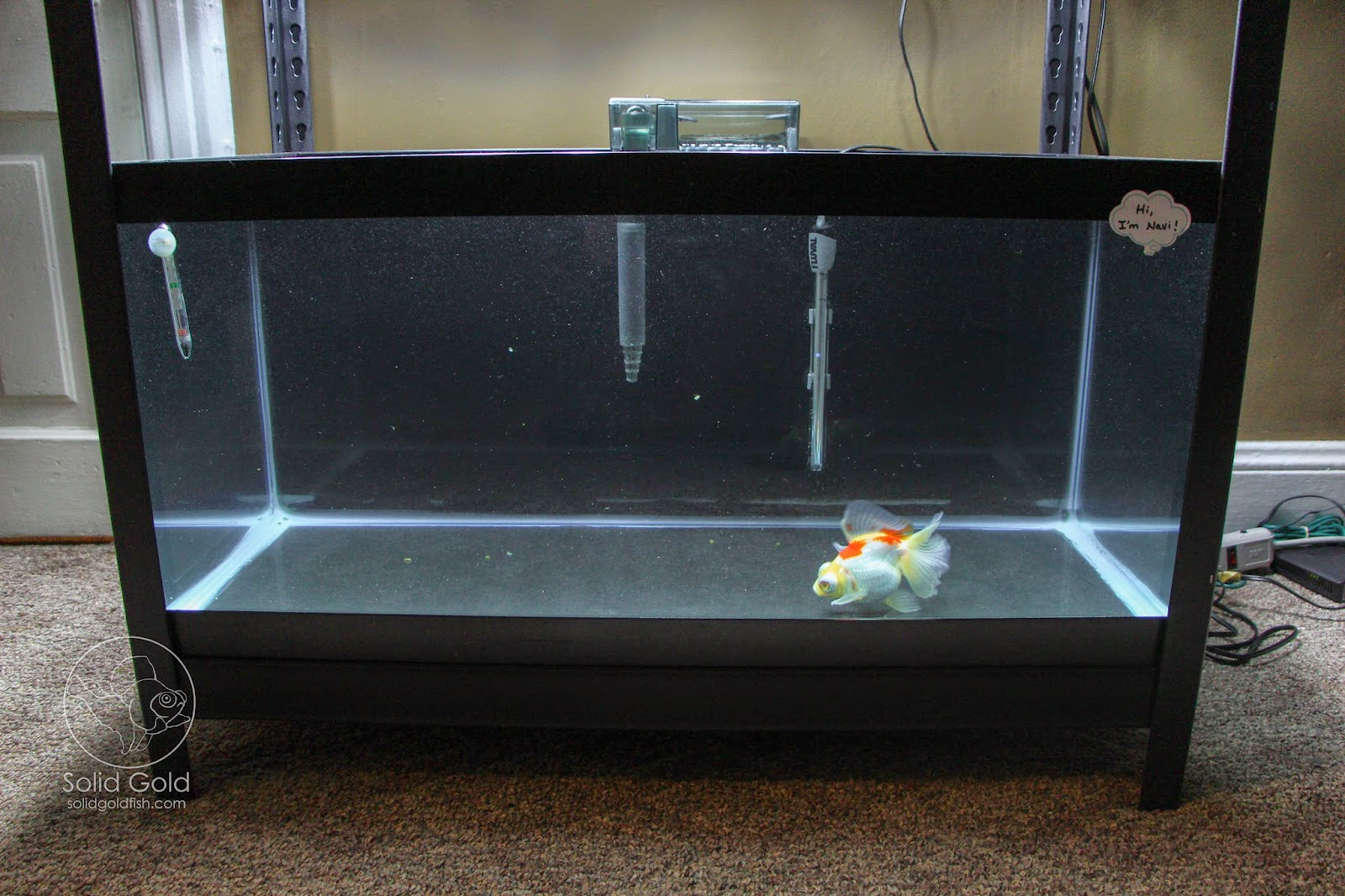 The perfect rack for 40 gallon tanks solid gold aquatics for Double fish tank stand