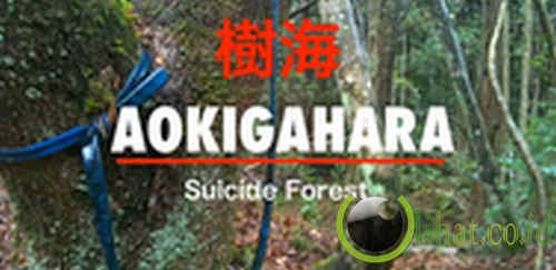 AOKIGAHARA / SUICIDE FOREST (2012)