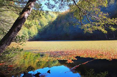 Lindo lago en otoño